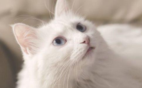 照料 疾病 猫咪 保健 健康 生病