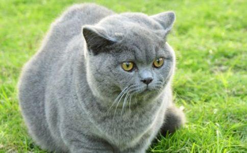 挑选 健康 猫咪 保健 宠物