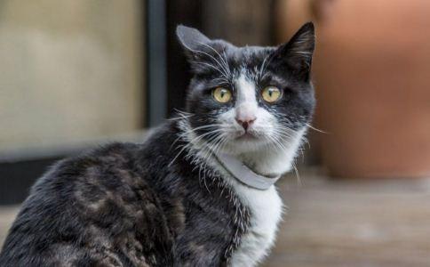 高龄 猫咪 营养 需求 保健 健康