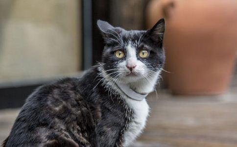 猫咪 计算 预产期 保健 健康