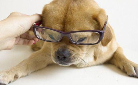 宠物 保健 补钙 骨骼 疾病 健康