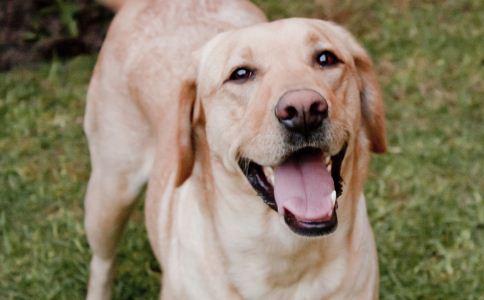 动物 动物用药 动物产品 产品质量 兽医 畜产品 药物质量