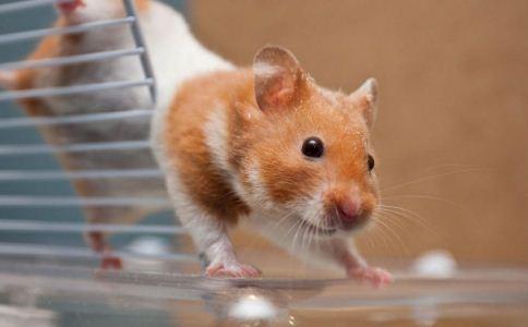 老鼠药 急救常识 误食老鼠药 急救 蔬菜 急救措施