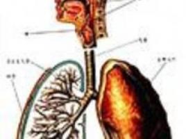 支气管炎有什么症状