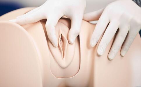 女性生殖器官 女性生殖器发育过程 女性生殖器 妇科整形
