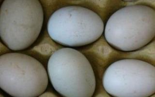 鸭蛋适合什么人食用_食物百科_饮食_99健康网