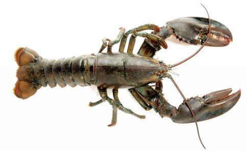 小龙虾的营养价值 小龙虾的作用与功效 小龙虾 营养价值