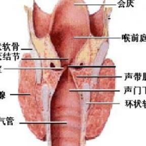 长期声音沙哑 需谨防喉癌