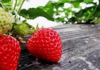 草莓是个宝 防癌新妙招