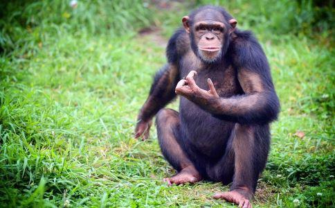 猿人族 用电脑坐姿