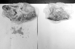 塑料袋的危害 塑料袋對環境的危害 塑料袋危害