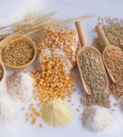 秋季养生宜吃的7种滋补食物