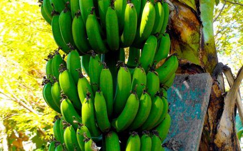 甘蕉根 甘蕉根的功效 甘蕉根的作用