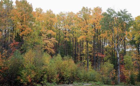 红椽木子 - 第1张    中草药图片大全-中药的功效与作用