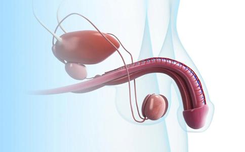 什么是睾丸固定手术 睾丸固定手术的适用人群 睾丸固定手术步骤是什么