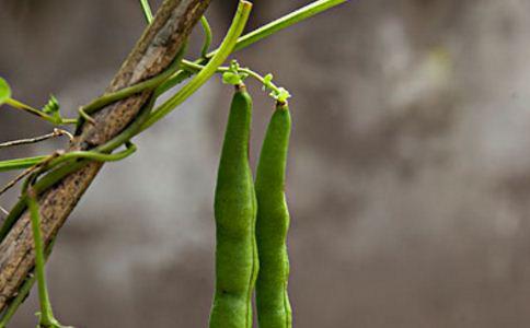 云南绿豆的作用和功能