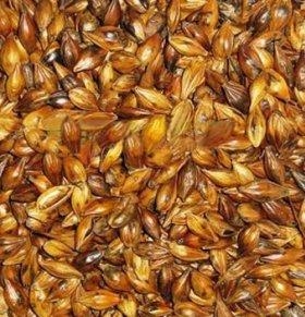 大麦的功效与作用
