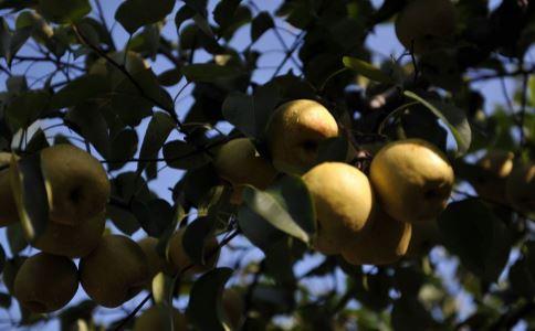 初秋养生吃什么 适合初秋养生吃的食物有哪些 初秋吃哪些食物好