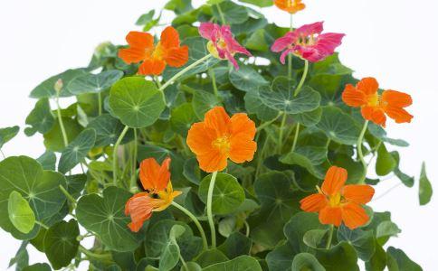 旱莲花 旱莲花的功效 旱莲花的作用