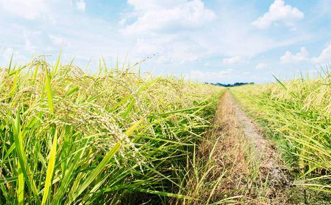 稻人的作用和功能