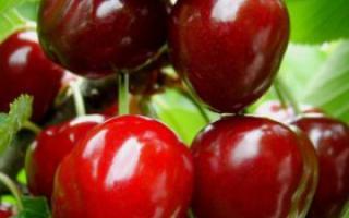 秋季排毒食物排行榜_排毒_女性_99健康网