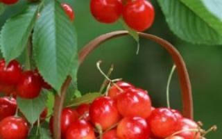 女人吃枣的好处和禁忌_食物百科_饮食_99健康网