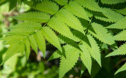 华东蕨类植物的作用和功能