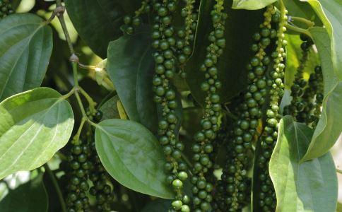 胡椒的功效和功能