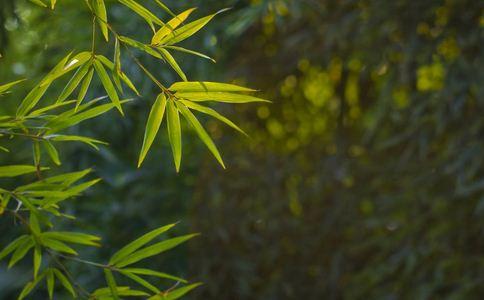 粗棕竹根的作用和功能