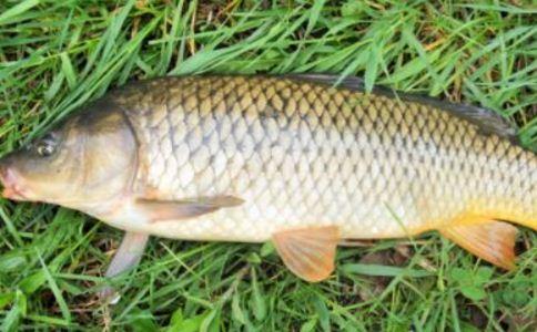鱣鱼肝 鱣鱼肝的功效 鱣鱼肝的作用