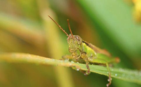 螳螂 螳螂的功效 螳螂的作用
