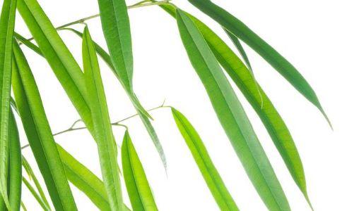 苦竹叶 苦竹叶的功效 苦竹叶的作用