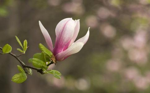 春季如何养生 春季养生的方法 春季养生清火