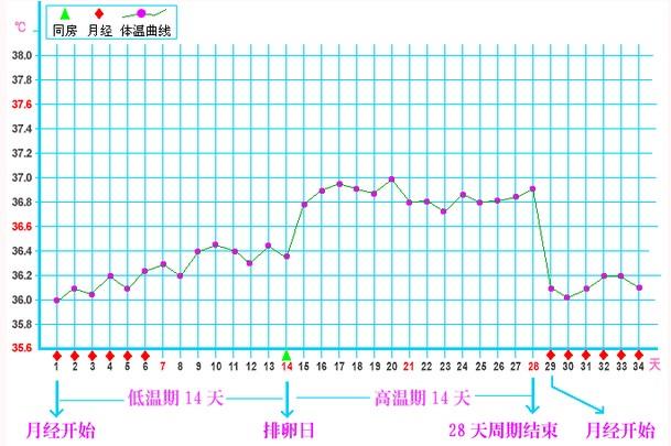 什么是基础体温 基础体温曲线图 女性基础体温曲线图