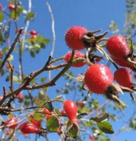 刺莓果的功效与作用