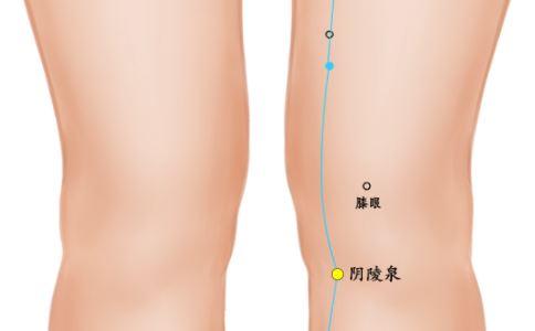 阴陵泉穴位的准确位置图 阴陵泉的准确位置图 阴陵泉穴位位置图