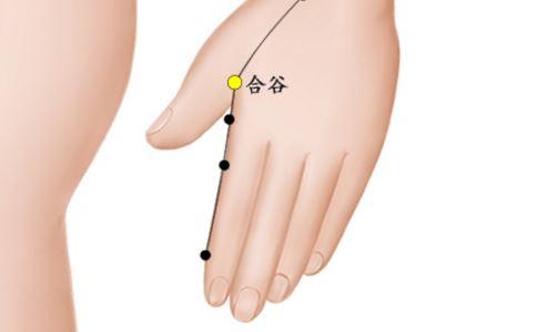合谷穴位的准确位置图 合谷穴的准确位置图 合谷穴准确位置图