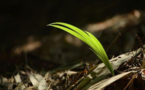 大扁竹兰 大扁竹兰的功效 大扁竹兰的作用