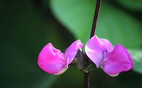 苔水花 苔水花的功效 苔水花的作用