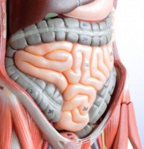 排便臭放屁臭口臭 肠道不健康的6大表现