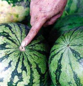 10招挑出皮薄味甜的西瓜