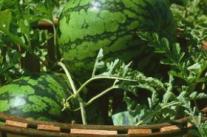 夏季减肥水果排行让你越吃越瘦