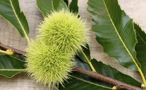 栲栗果壳 栲栗果壳的功效 栲栗果壳的作用