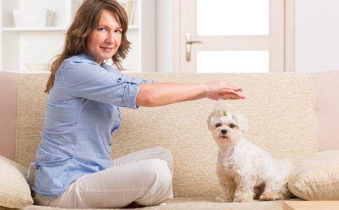 宠物狗做伴的好处 宠物狗做伴对人的好处 宠物狗做伴让人更年轻