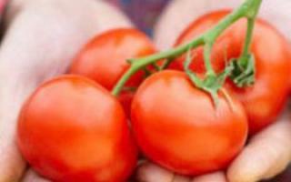 西红柿的功效与食用禁忌_居家与养生_中医_99健康网