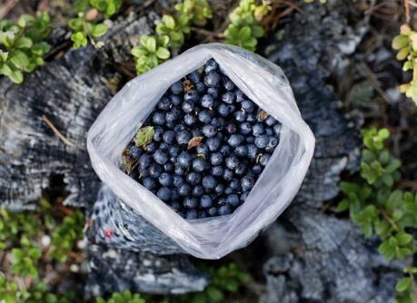 蓝莓的功效 蓝莓的吃法 蓝莓的功效与作用