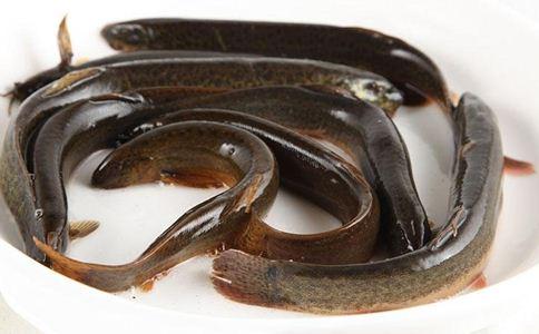 吃泥鳅的好处 吃泥鳅的禁忌 泥鳅养生食谱