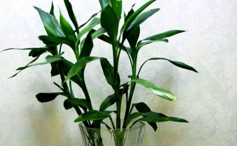 百威竹笋的作用和功能