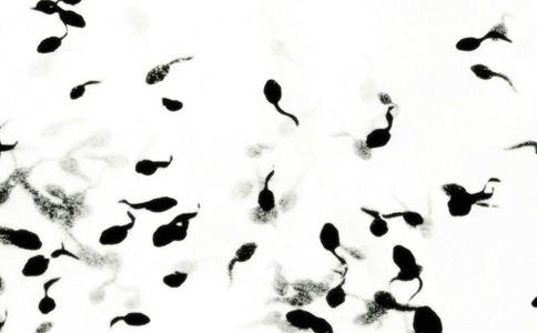 蝌蚪 蝌蚪的功效 蝌蚪的作用