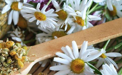 白菊花根的作用和功能